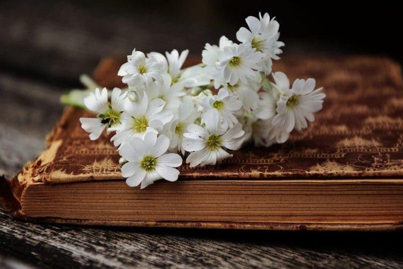 book-2363912_1280